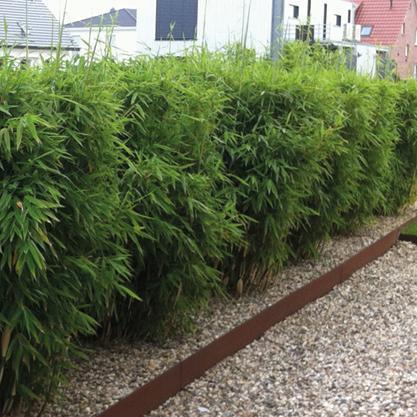 Der Richtige Bambus Fur Ihren Garten